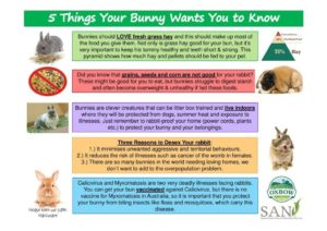 Small 5 Things Your Bunny Wants You to Know back