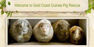 Gold Coast Guinea Pig Rescue