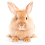 Oxbow articles on rabbit care