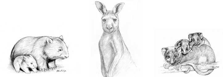 Oxbow Critical Care - Australian Wildlife